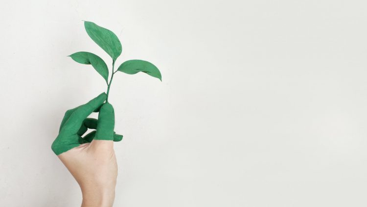 What Sustainable Innovation Might Look Like in 2021